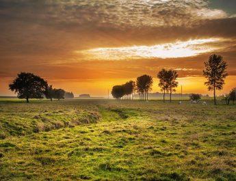 """Debatt: """"Växter är de verkliga producenterna – men vi behöver djuren"""""""