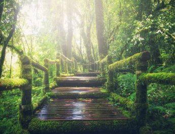 FN:s klimatrapport (3):  Pathway 1 – En möjlighet?