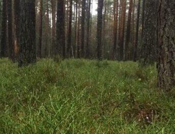 Riv upp skötselplanen för naturreservatet Hedlandet!